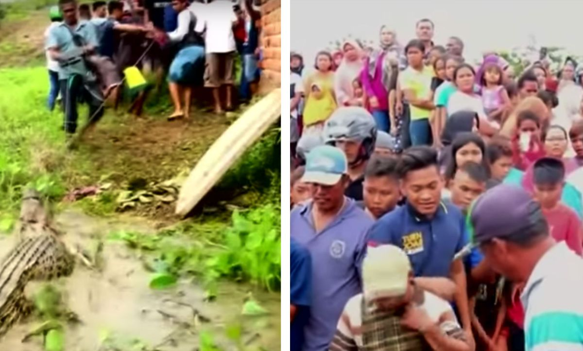 A mob of locals killed nearly 300 crocodiles in a breeding farm in West Papua province, Indonesia. Photo: YouTube