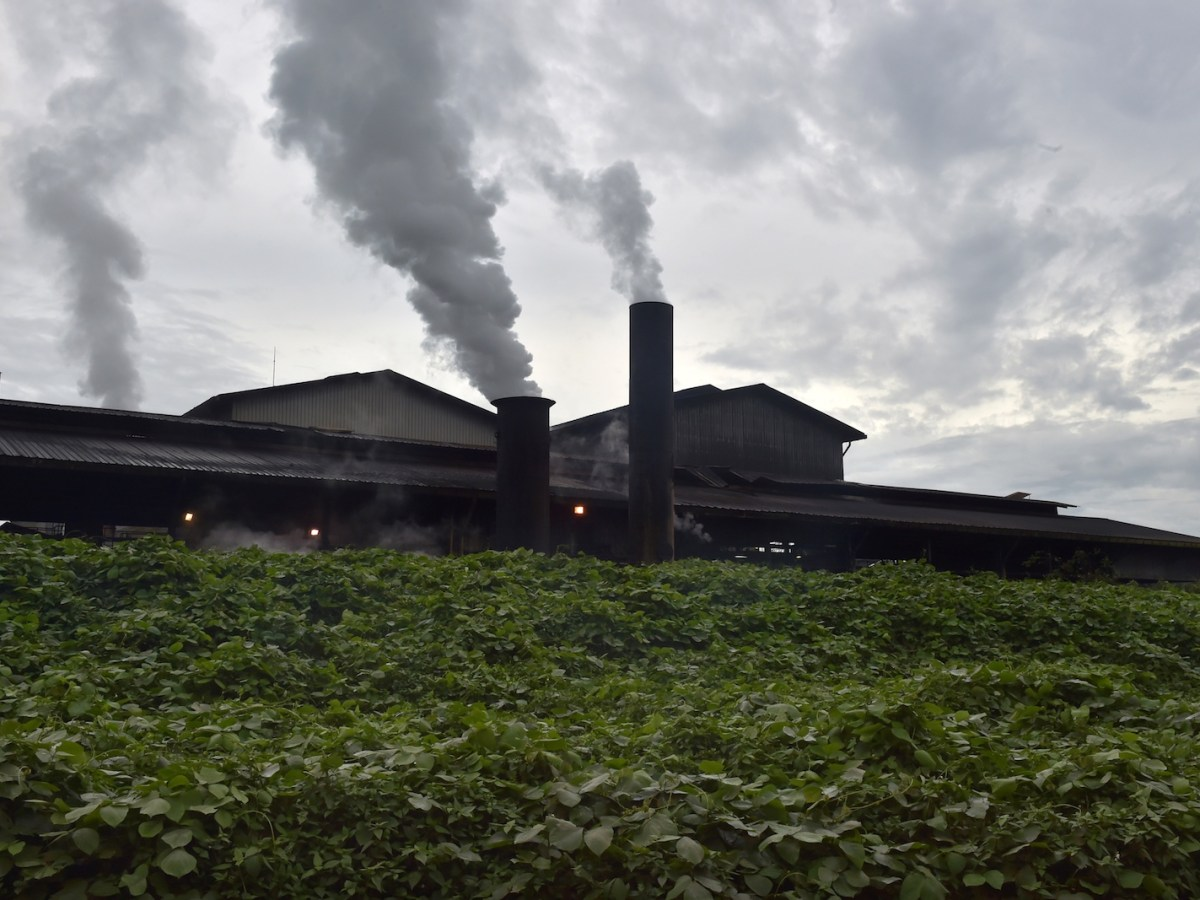 This picture taken in Feb 2017 shows thick smoke spewing from a crude palm oil factory in Kendawangan, West Kalimantan. The palm oil industry has been repeatedly accused over the years of failing to protect workers' rights and tearing down protected forest for plantations, prompting many companies to pledge greater efforts to improve conditions and halt deforestation. Photo: AFP / Adek Berry