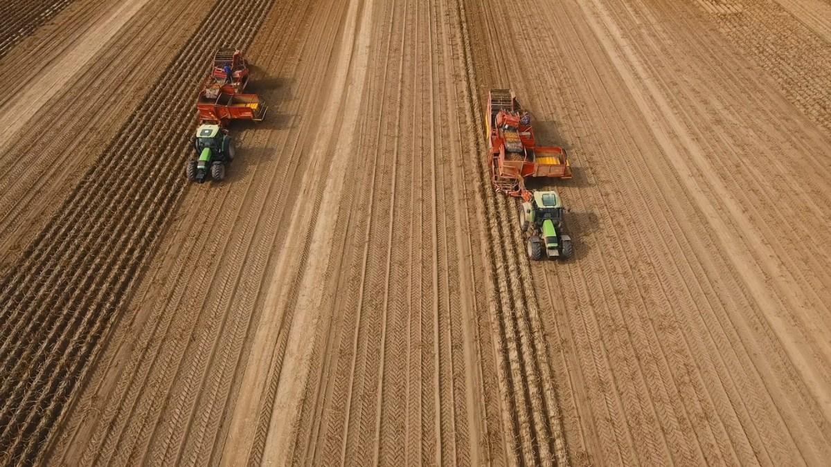 Farm machinery harvesting potatoes. Farmer field with a potato crop. Photo: iStock