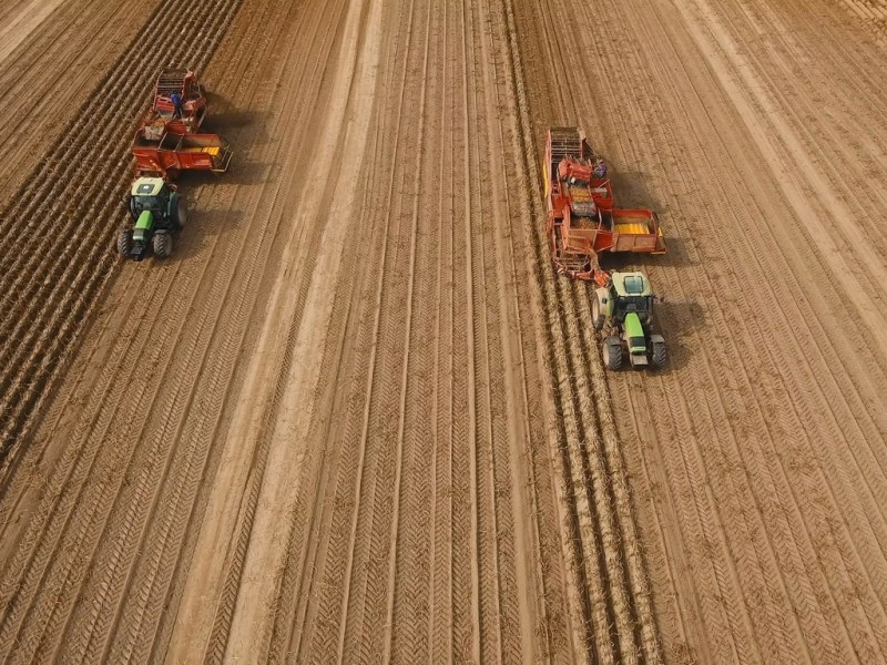 Farm machinery harvesting potatoes. Farmer field with a potato crop. Photo: iStock