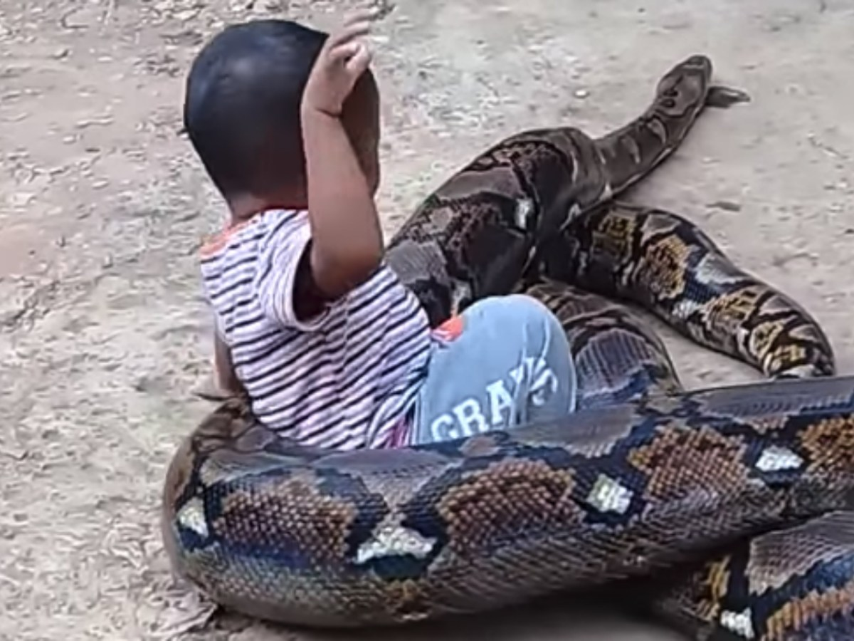 A young boy sits on the python and goes for a ride. Photo: Viralhog@YouTube.