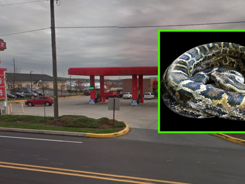 The snake was found early in the morning at a New Holland Sheetz store. Photo: Google Maps, inset iStock
