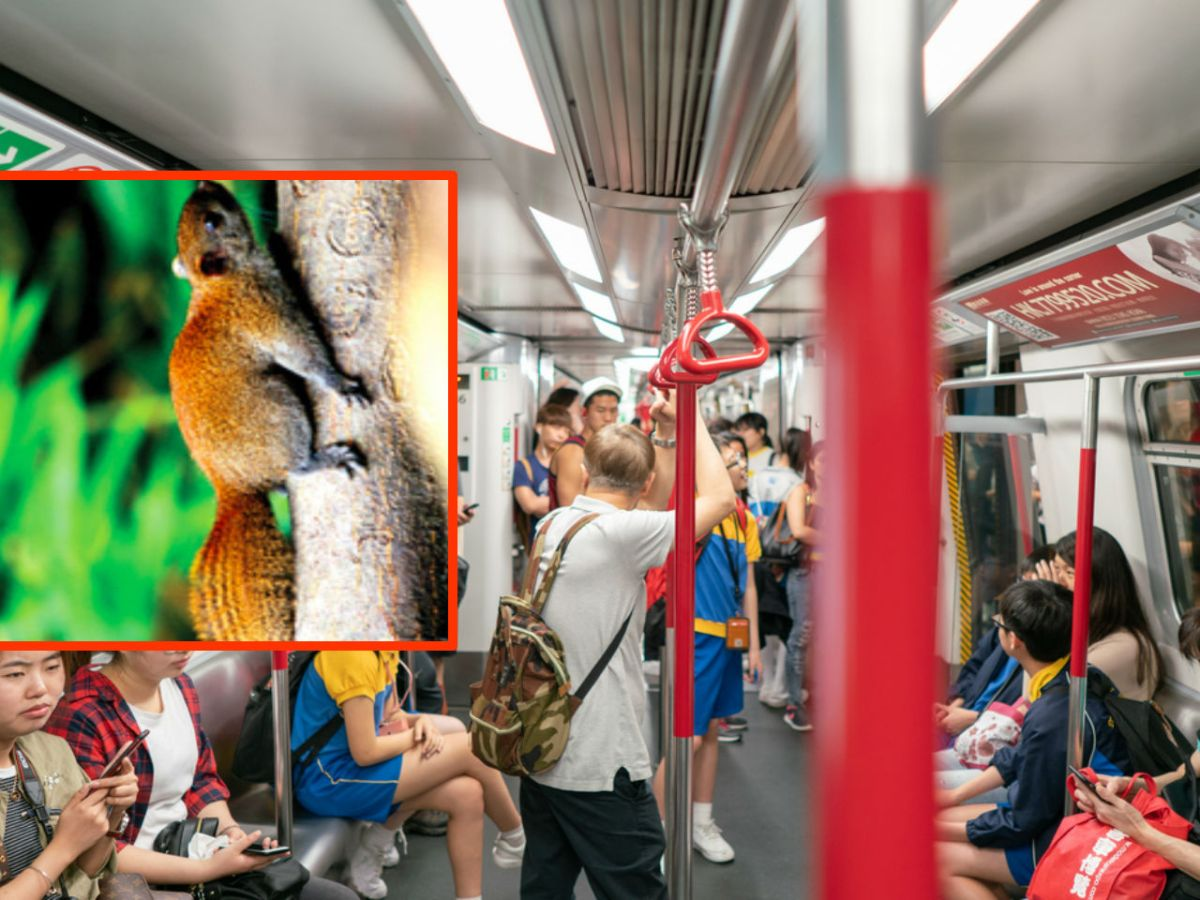 A squirrel-less MTR train and, inset, a squirrel on a tree. Photo: iStock/HK Government