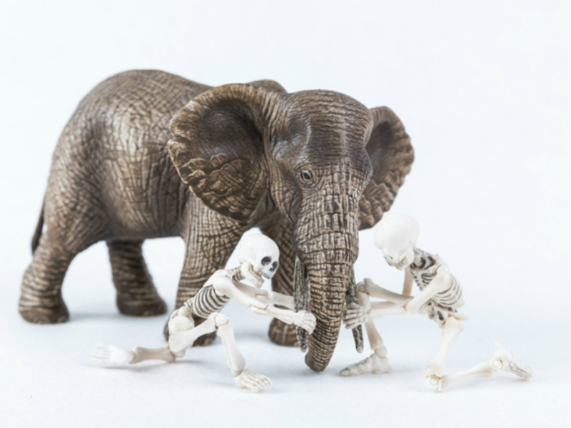The ivory trade has endangered elephants as a species. Photo: iStock