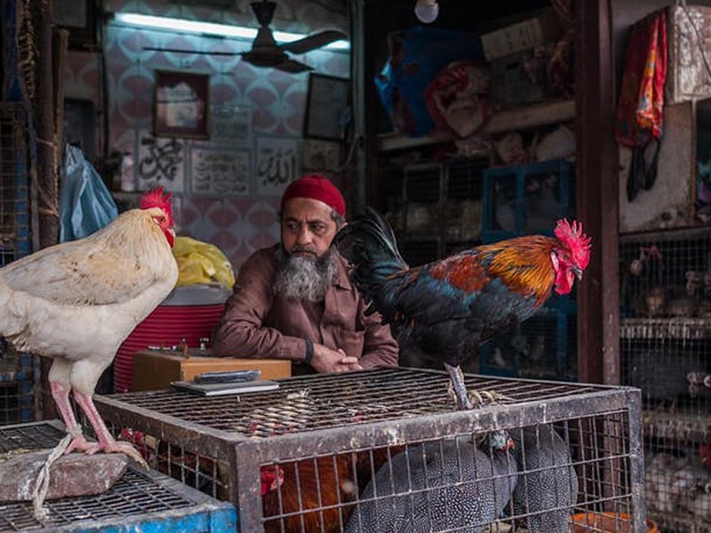 Indian has a booming poultry market. Photo: Pau Casals/Unsplash