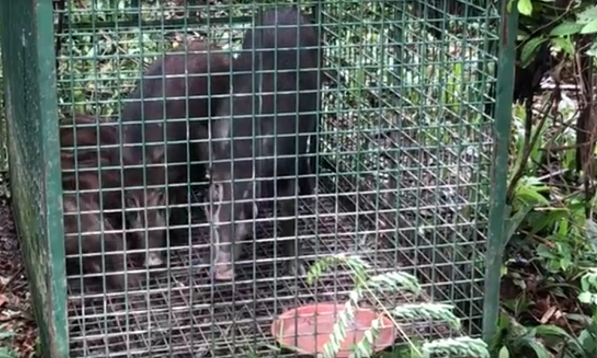The cage was found just off Sime Road. Photo courtesy of Louis Ng Kok Kwang, Facebook.