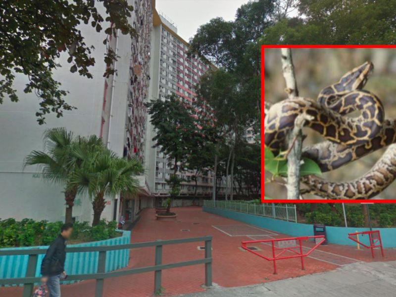 Kai Yip Estate, Kowloon Photo: Google Maps, AFCD