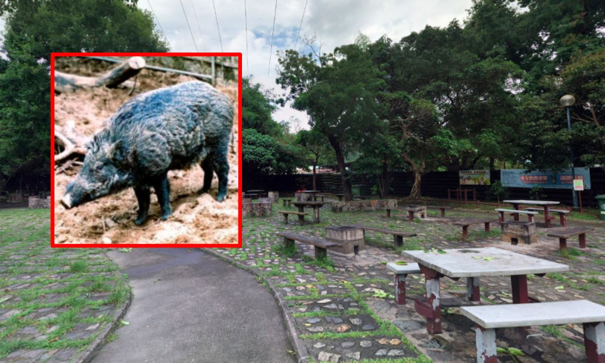 The Aberdeen Reservoirs BBQ Area on Hong Kong Island where a wild pig had a feast with someone's picnic. Photo: Google Maps/AFCD