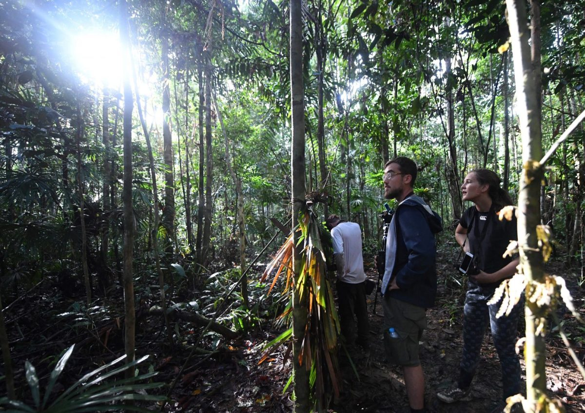 Bird watchers gather at a hideout as they wait for a glimpse of the bird-of-paradise, known locally as a cendrawasih bird, in Sorong's Malagufuk village. Photo: AFP