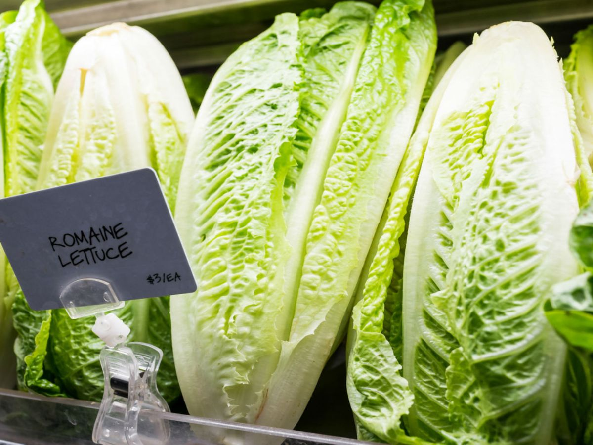 Romaine lettuce, which has been linked to an  outbreak of infection. Photo: iStock