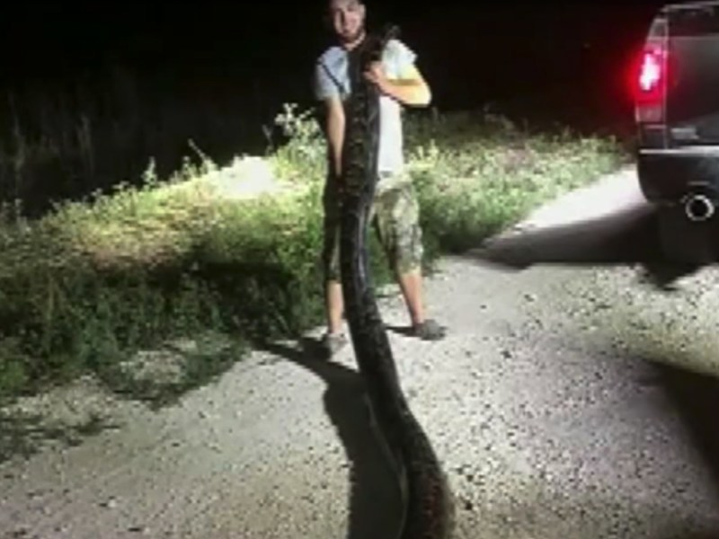 Trapper Kyle Penniston and the record-setting python. Photo: YouTube