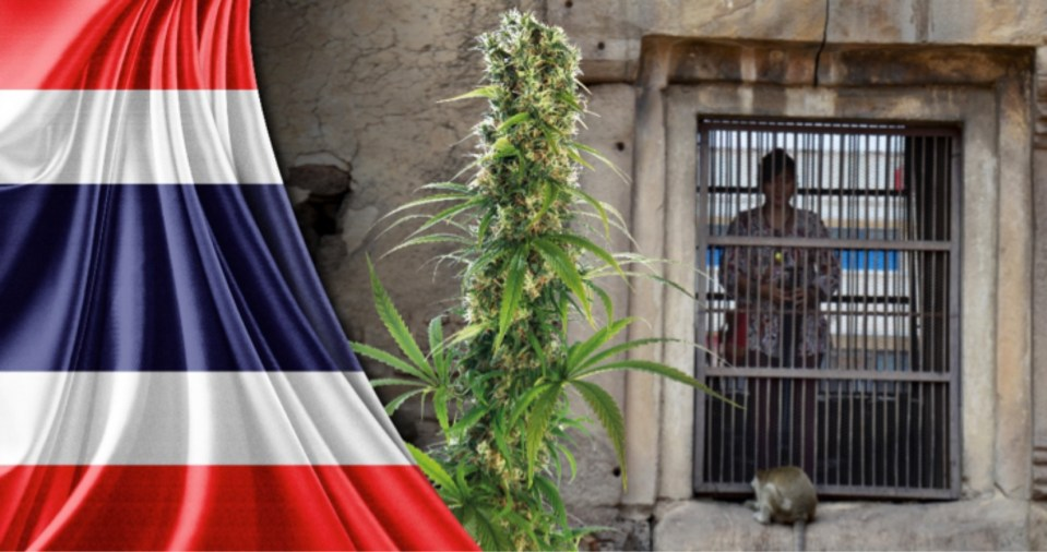 A marijuana plant juxtaposed against a Thai flag and prison cell in a collage image. Image: Facebook