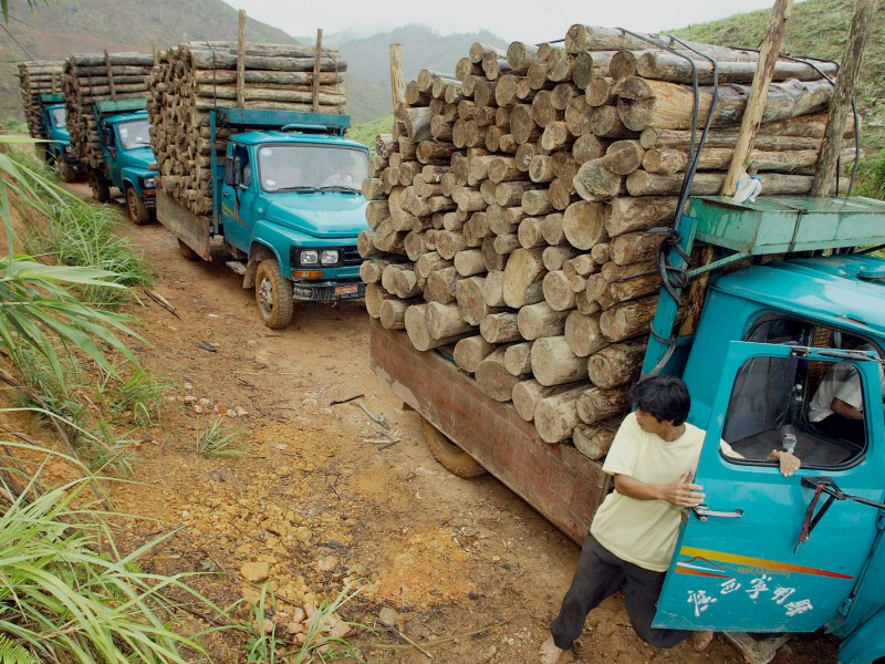 Loggers get ready to take logs away on the China-Vietnam border village of Dongzhong in this file photo from 2003. The EU is working on a deal to buy verifiable timber from Vietnam but the industry is still riddled with corruption. Photo: AFP / Peter Parks