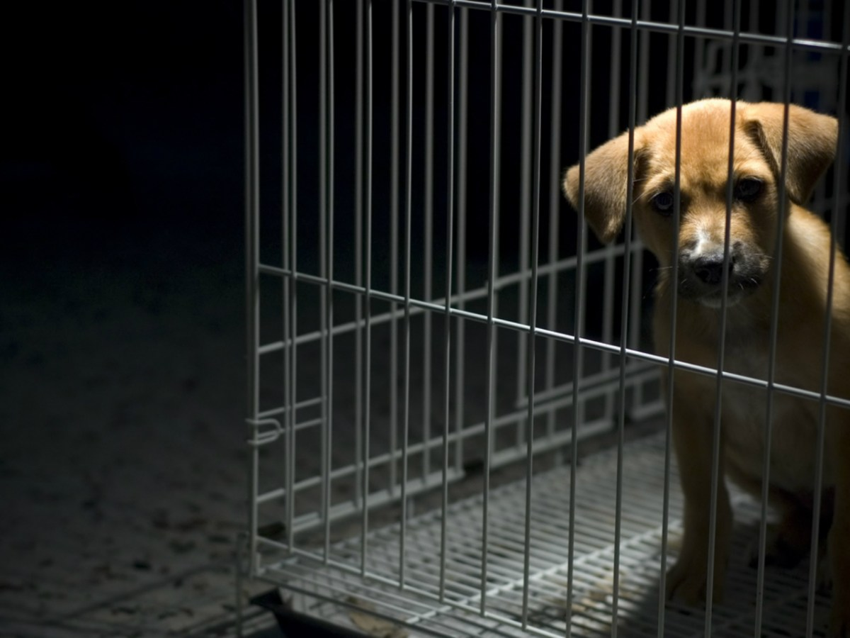 Cambodia has a substantial population of dog meat eaters. Photo: iStock.