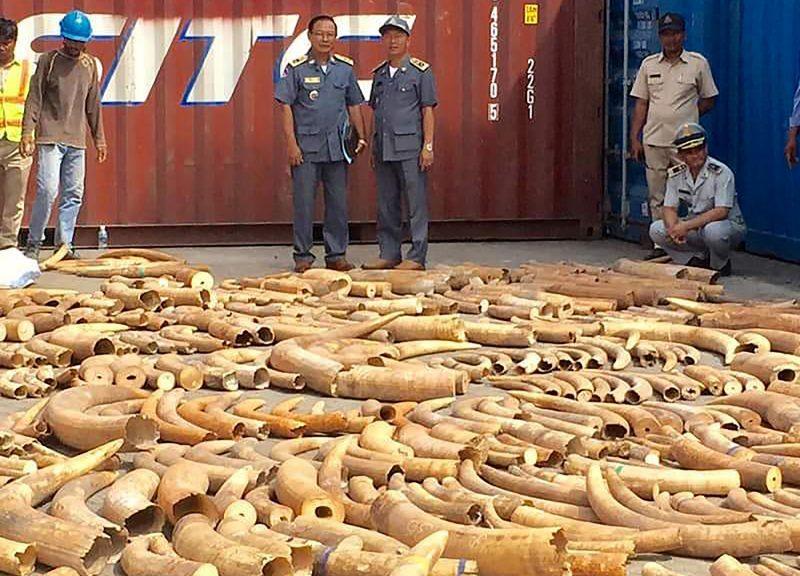 柬埔寨官員看著從金邊港口的貨櫃箱中檢獲的象牙。柬埔寨去年12月16日從一個由莫桑比克運來的儲物貨櫃中查獲超過3.2公噸的象牙,這是柬埔寨歷來破獲的最大規模象牙走私案。專家相信這批象牙是打算運往越南的。相片:AFP / Ban Chork