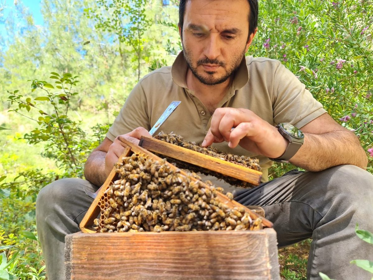 Beekeepers creating a buzz with pioneering honey initiative