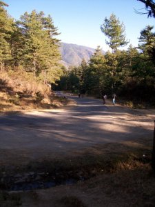 What To Do In Bhutan - See Bhutan National Animal - Takin - road to the preserve