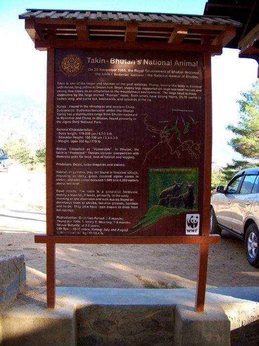 Best Places To Visit In Thimphu Bhutan - Takin Preserve - About Takin - Bhutan's National Animal
