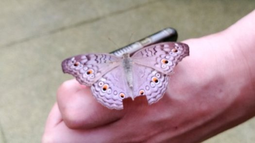 A Pretty Purple Butterfly landed on a friend's hand