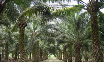 No Denigration of Palm Oil  *By Datuk Seri Mah Siew Keong