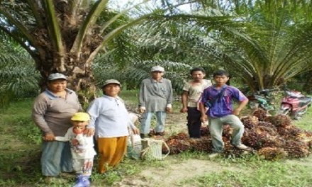Anti-palm Oil Lobby Threatening Livelihood of 650,000 Smallholders
