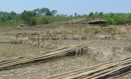 ENERGY TRANSITIONS IN INDONESIA: PERSIST OR PERISH