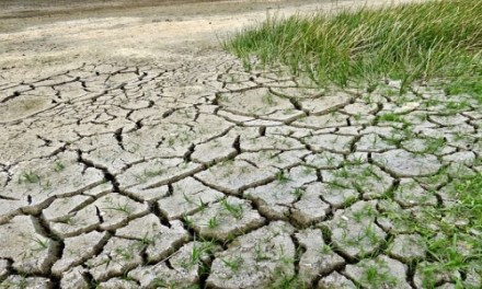 INDIA SHOULD TAKETHE LEAD ON CLIMATE CHANGE