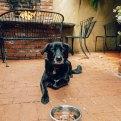Dog Friendly Restaurants Carmel, California - Forge in Forest