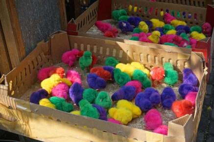 gefärbte Eier ausgebrütet - Vogelmarkt in Yogyakarta