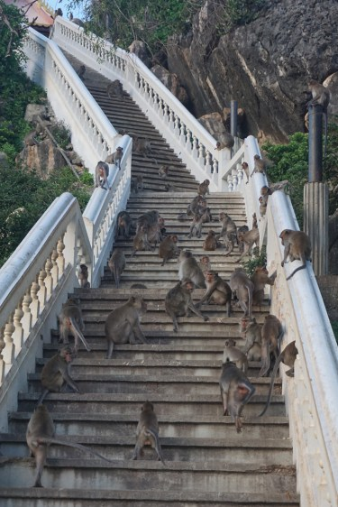 Spießrutenlauf auf den Khao Chong Kra Chok, Prachuap Khiri Khan