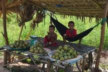 Obsthändler