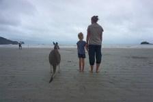 Na, auch hier, um auf's Meer zu gucken? - Cape Hillsborough