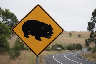 Achtung Wombats (bis zu 40kg schwer)!