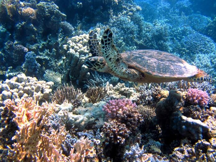 Segundo coral 2