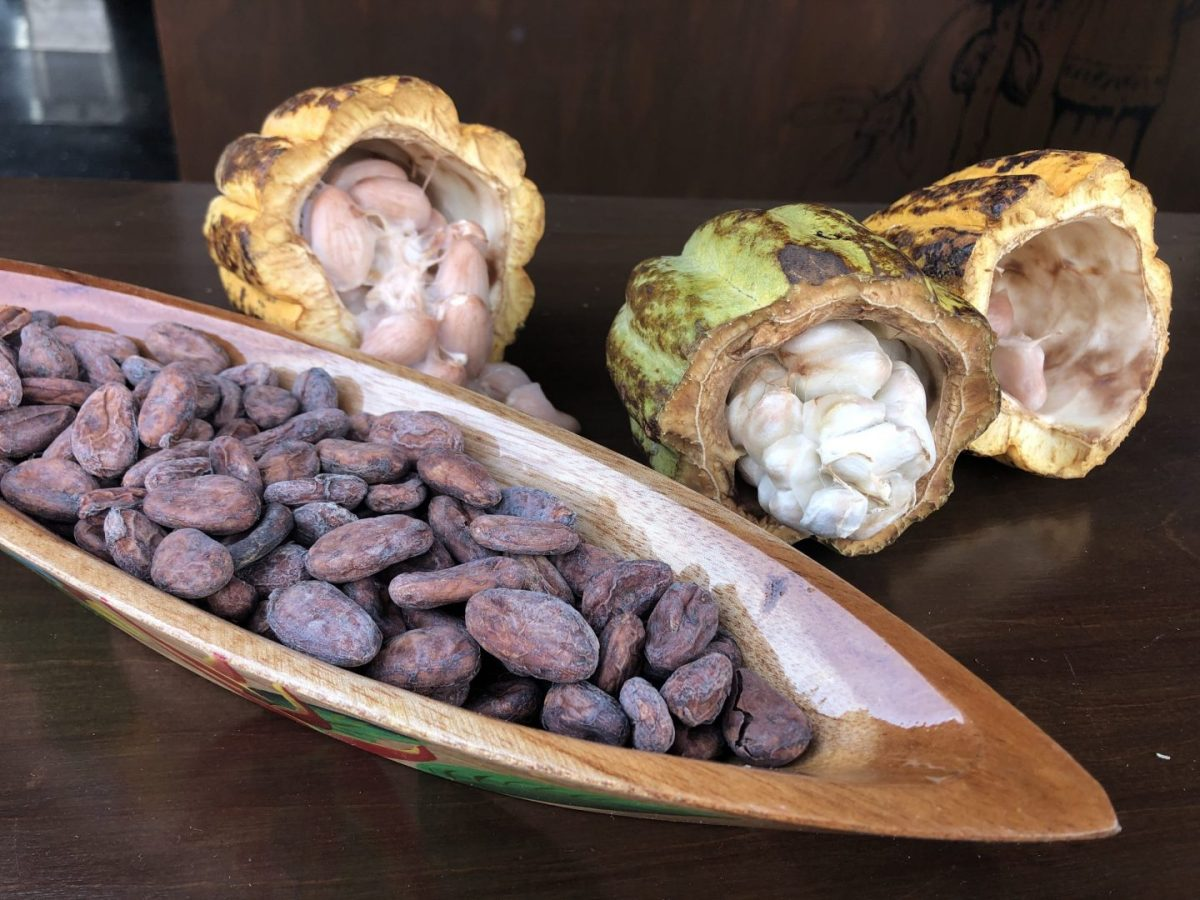 cacao-maya-asiesmerida