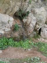 delphi 36 apollo