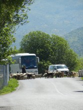 When I got closer there were more tour buses but I did enjoy the fact that most of them were trapped beyond a barrier of recalcitrant sheep