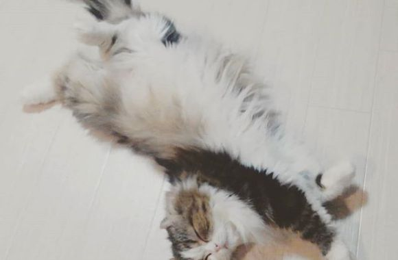 半捻床完睡猫#catstagram