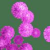 SOSF_Blog_Coronavirus2