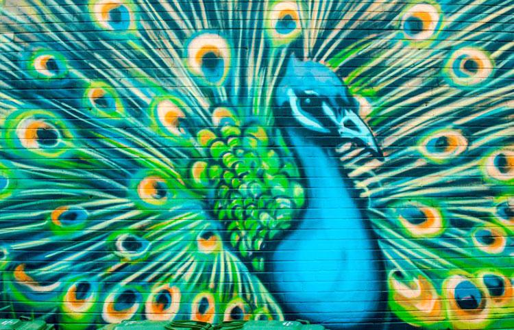 Animals And Birds Wallpaper As I Walk Toronto Graffiti Animals