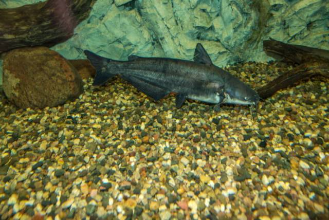 an Average angler needs a catfish rod that handles a the way a catfish fights