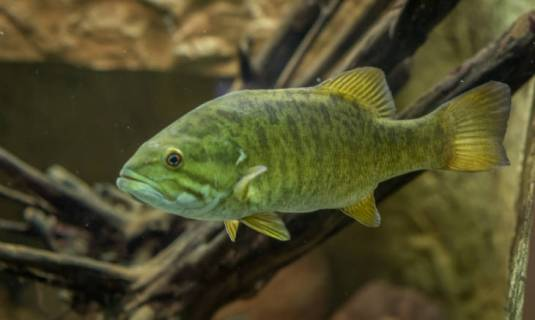 smallmouths prefer small baits in rivers and streams