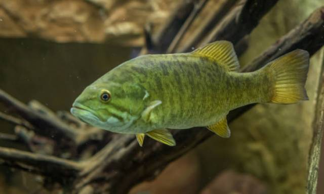 Catch Summer Smallmouth by learning the proper techniques