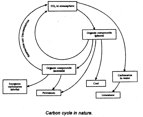 With the help of a labelled diagram show the carbon cycle
