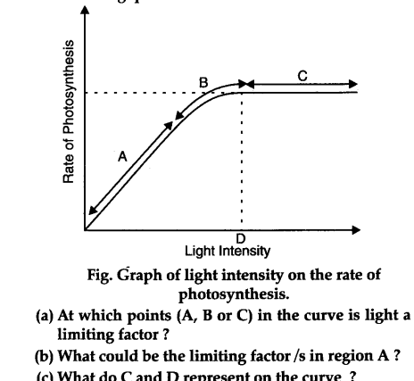 Figure shows the effect of light on the rate of