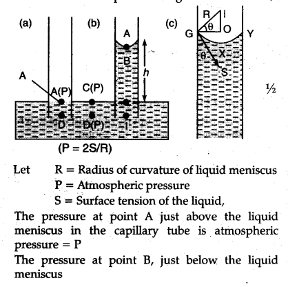 Derive the formula for rise of liquid in a capillary tube