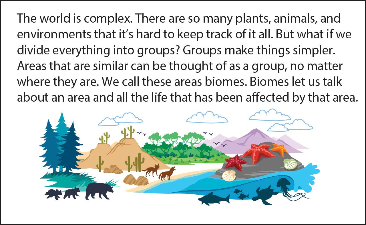 Biology Reading Flashcards