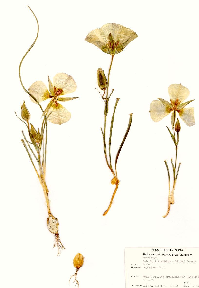 Pressed Plants ASU Ask A Biologist