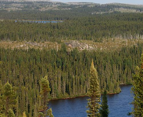taiga or boreal forest
