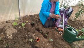 planting in tunnel